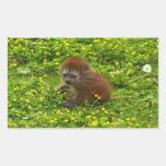 Baby Alaotran Gentle Lemur Rectangular Sticker