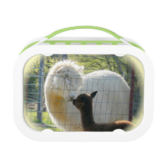 Baby Alpaca Kiss Lunch Box