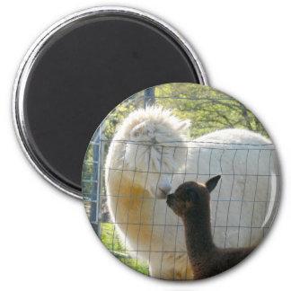 Baby Alpaca Kiss Magnet