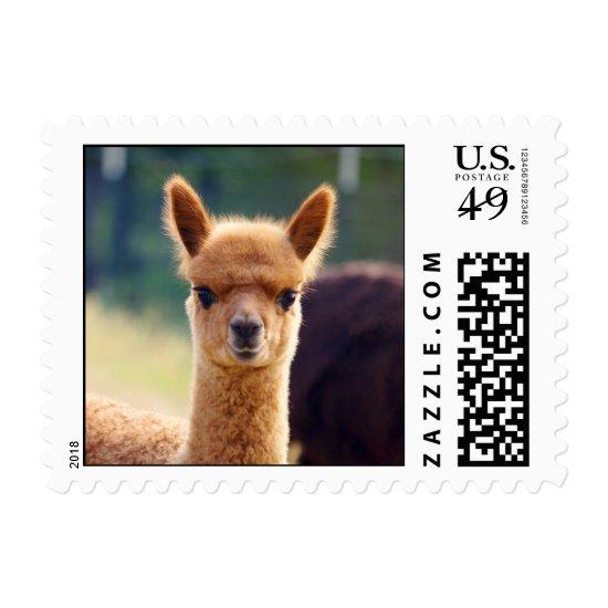 Baby Alpaca Postage