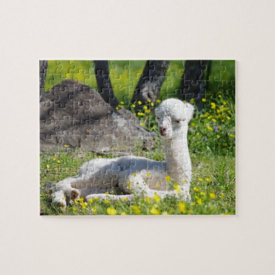 Baby Alpaca Puzzle with Gift Box