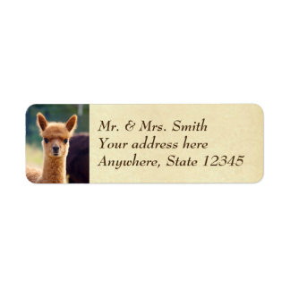 Baby Alpaca Return Address Labels