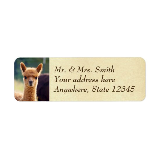 Baby Alpaca Return Address Labels