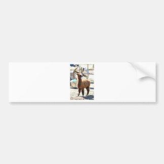 Baby Alpaca - Vicugna pacos Bumper Sticker