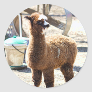 Baby Alpaca - Vicugna pacos Classic Round Sticker