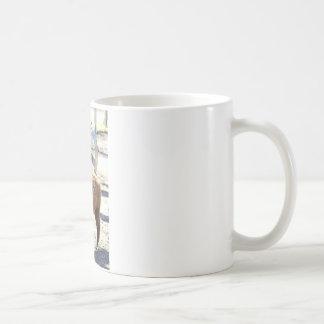 Baby Alpaca - Vicugna pacos Coffee Mug