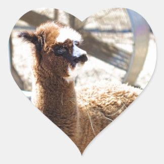 Baby Alpaca - Vicugna pacos Heart Sticker