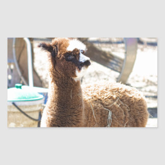 Baby Alpaca - Vicugna pacos Rectangular Sticker