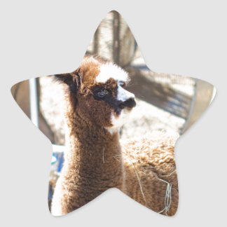 Baby Alpaca - Vicugna pacos Star Sticker