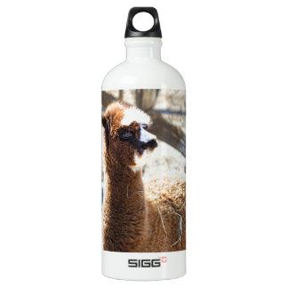 Baby Alpaca - Vicugna pacos Water Bottle