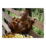 Baby Animal Banana Picnic Card