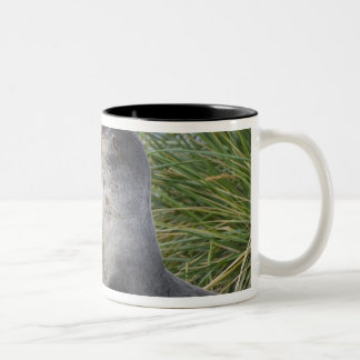 Baby Antarctic Fur Seal Arctocephalus Two-Tone Coffee Mug