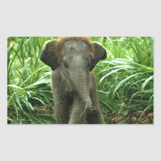 Baby Asian Elephant Rectangular Sticker
