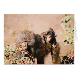 Baby Baboon Note Card