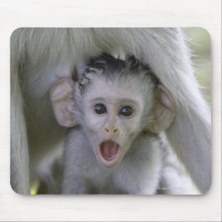 Baby baboon underneath its mother mouse pad