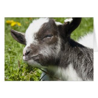 Baby Bagot Goat   Blank Card
