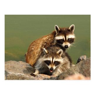 Baby Bandits Postcard