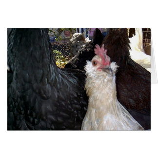 Baby Bantam Rooster Card