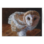 Baby Barn Owl Bird Greeting Cards
