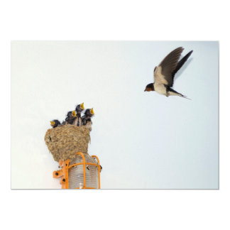 Baby Barn Swallows being fed by their mother Card