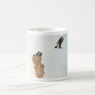 Baby Barn Swallows being fed by their mother Mugs