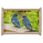 Baby Barn Swallows Cute Birds Food Tray