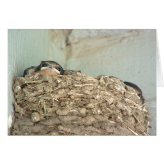 Baby Barn Swallows  Greeting Card