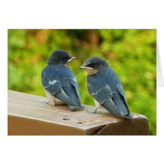 Baby Barn Swallows Nature Bird Photography Card