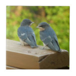 Baby Barn Swallows Nature Bird Photography Ceramic Tile