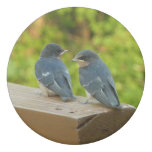 Baby Barn Swallows Nature Bird Photography Eraser