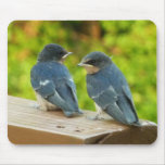 Baby Barn Swallows Nature Bird Photography Mouse Pad