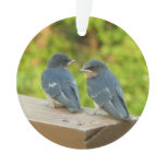 Baby Barn Swallows Nature Bird Photography Ornament