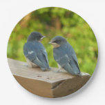 Baby Barn Swallows Nature Bird Photography Paper Plate