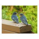 Baby Barn Swallows Nature Bird Photography Photo Print