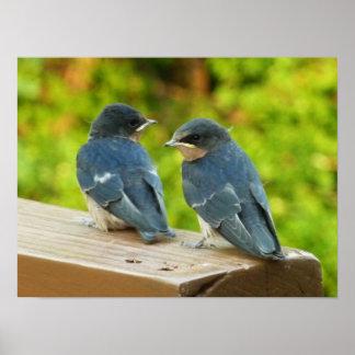 Baby Barn Swallows Nature Bird Photography Poster