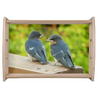 Baby Barn Swallows Nature Bird Photography Serving Tray