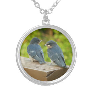 Baby Barn Swallows Nature Bird Photography Silver Plated Necklace