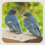 Baby Barn Swallows Nature Bird Photography Square Sticker
