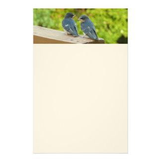 Baby Barn Swallows Nature Bird Photography Stationery