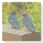 Baby Barn Swallows Nature Bird Photography Stone Coaster