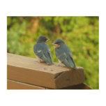 Baby Barn Swallows Nature Bird Photography Wood Wall Decor