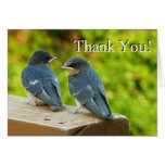 Baby Barn Swallows Nature Thank You Card