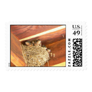 Baby Barn Swallows Postage Stamp