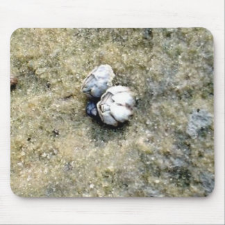 Baby Barnacles Mouse Pad
