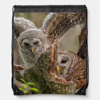 Baby Barred Owl, Strix varia Drawstring Bag
