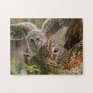Baby Barred Owl, Strix varia Jigsaw Puzzle
