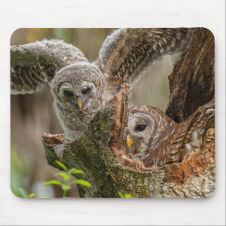 Baby Barred Owl, Strix varia Mouse Pad