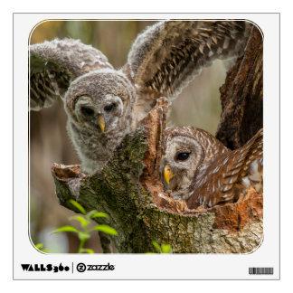 Baby Barred Owl, Strix varia Wall Decor