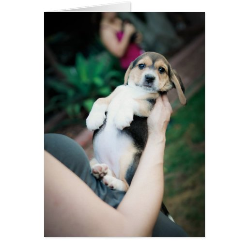 Baby Beagle Belly Greeting Card