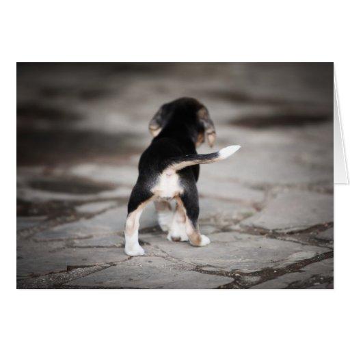 Baby Beagle Bottom Cards